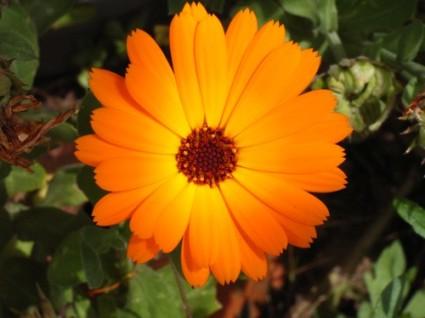 m-fleurs_printemps_007
